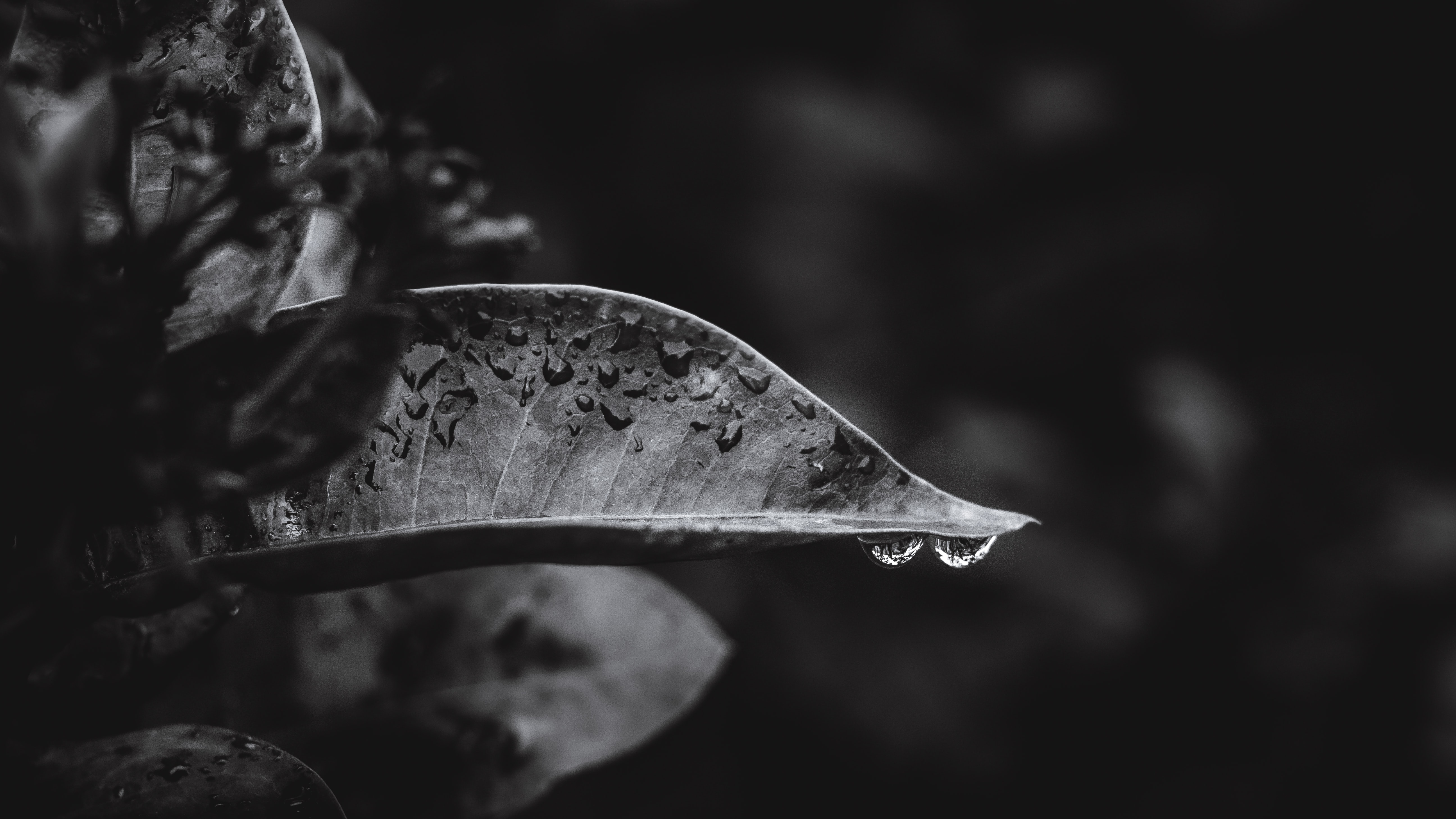grayscale and bokeh photography of leaves