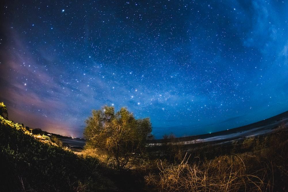 green tree under starry night