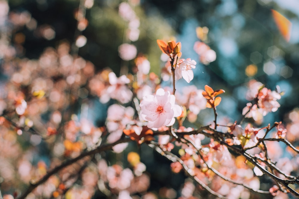 selective focus of white cherry blossom during daytime