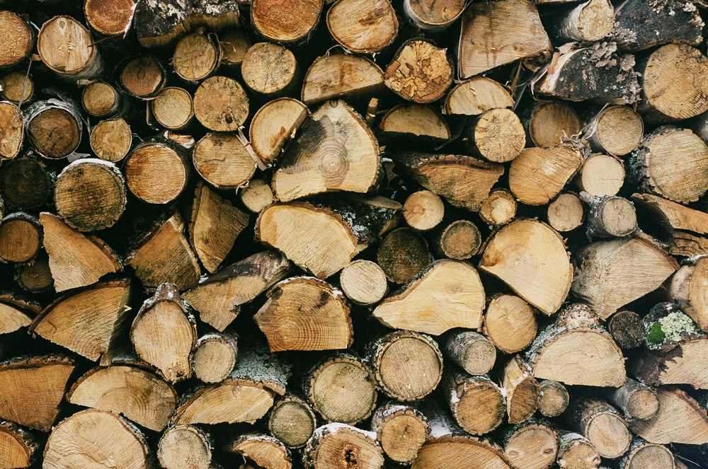 selective focus photography of wood log