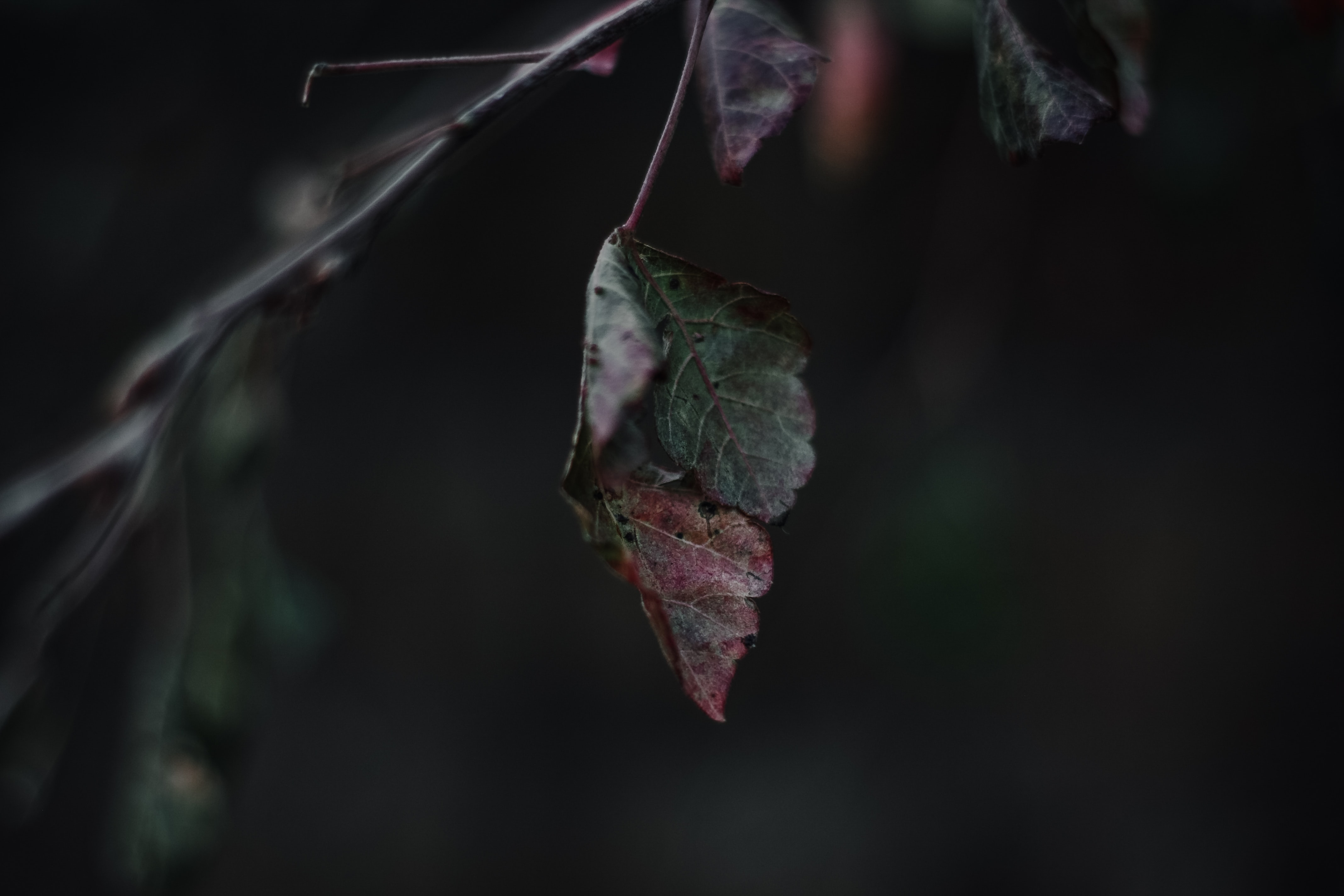 close-up photography of brown and green leaves