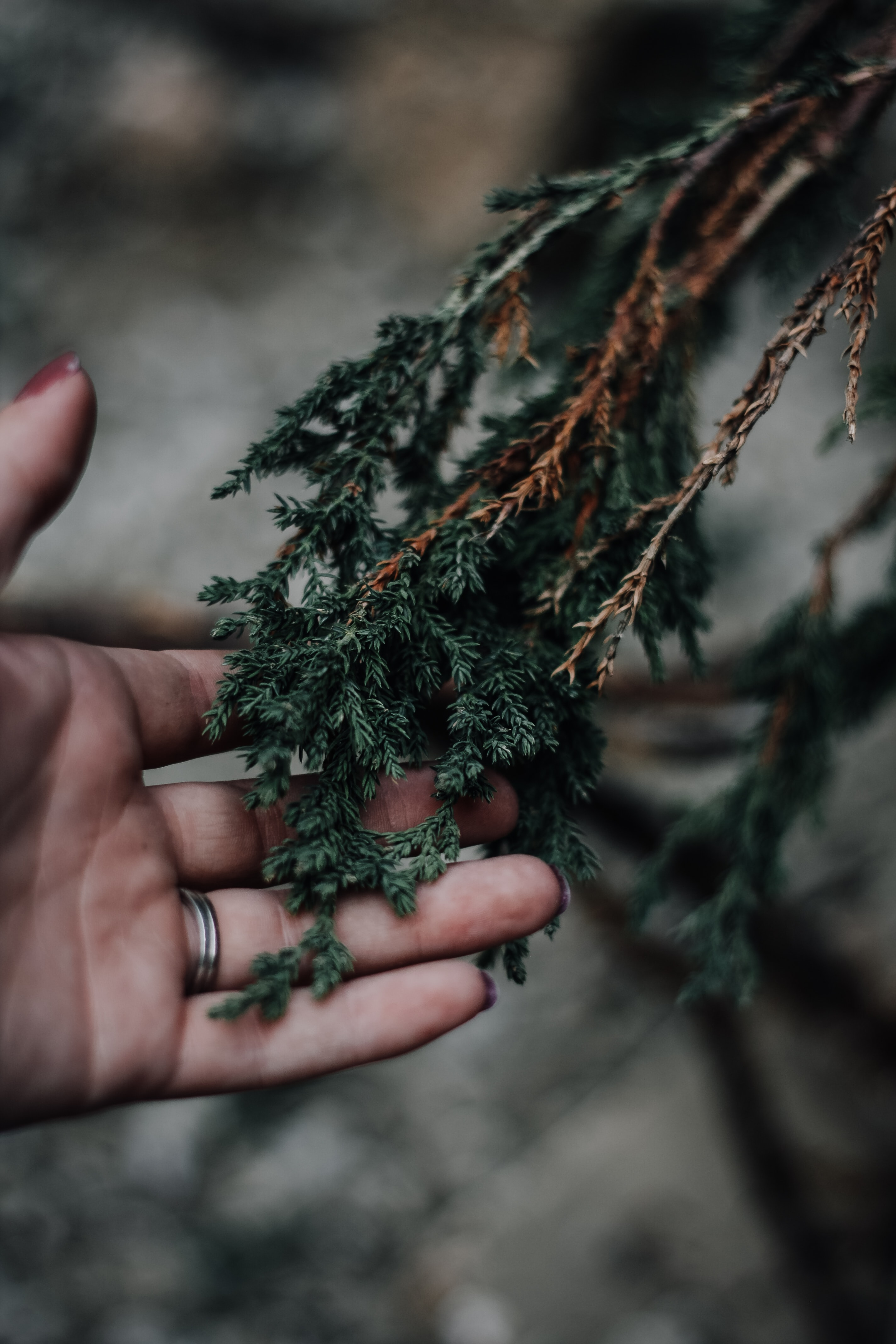 person holding green leafed plant