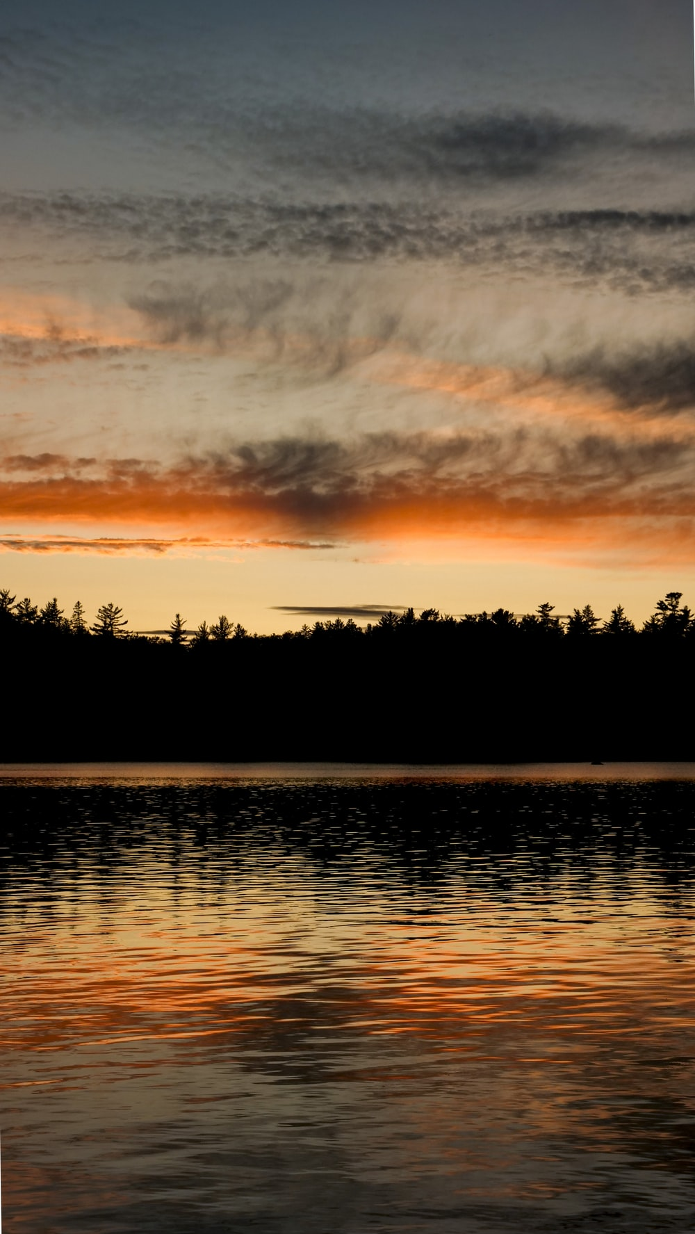 silhouette photo of trees and lake during dawn