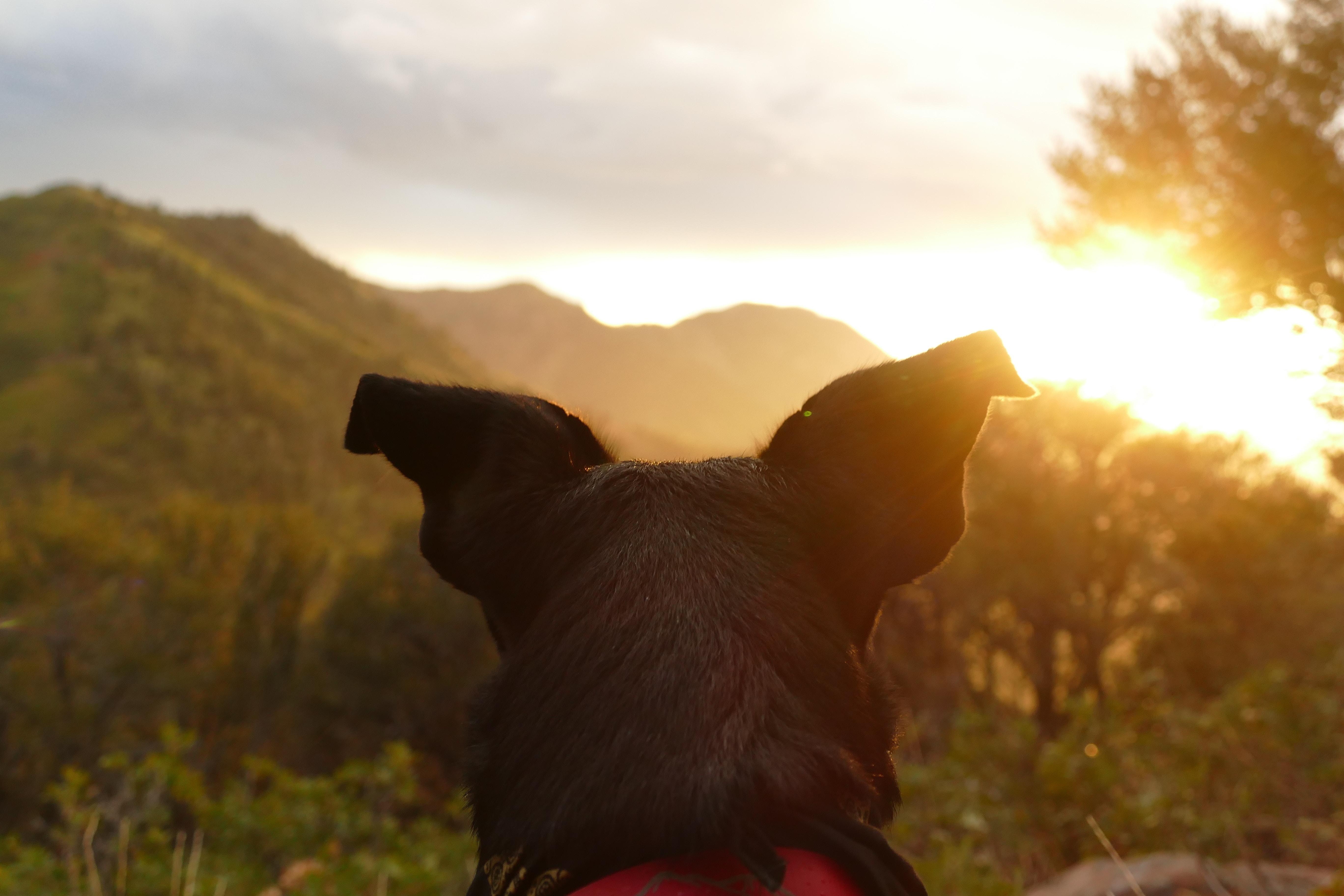 black dog facing mountain range during golden hour