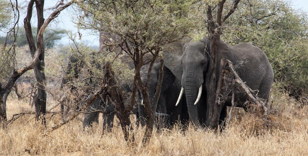 four elephants beside trees
