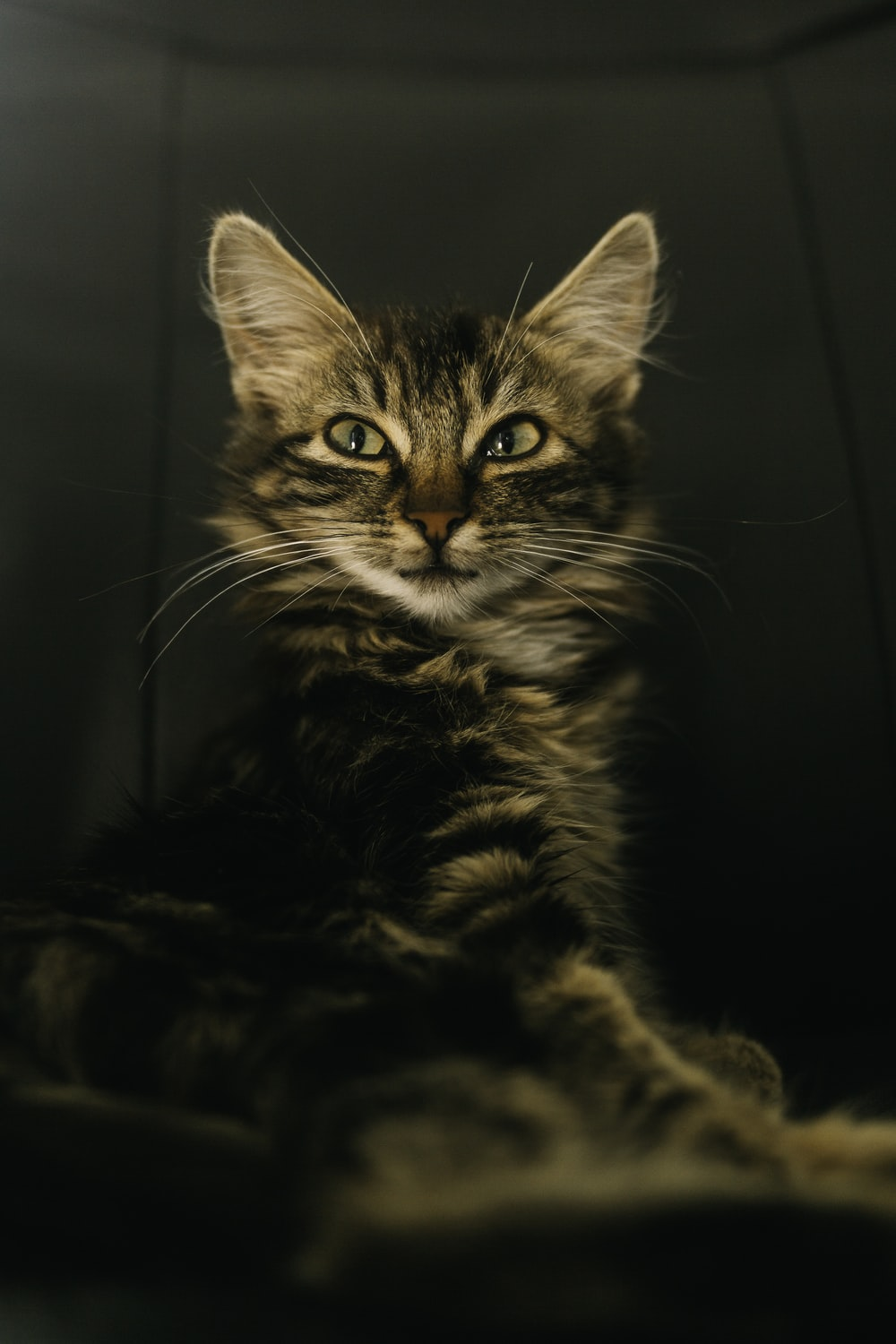 brown tabby cat in grayscale photography