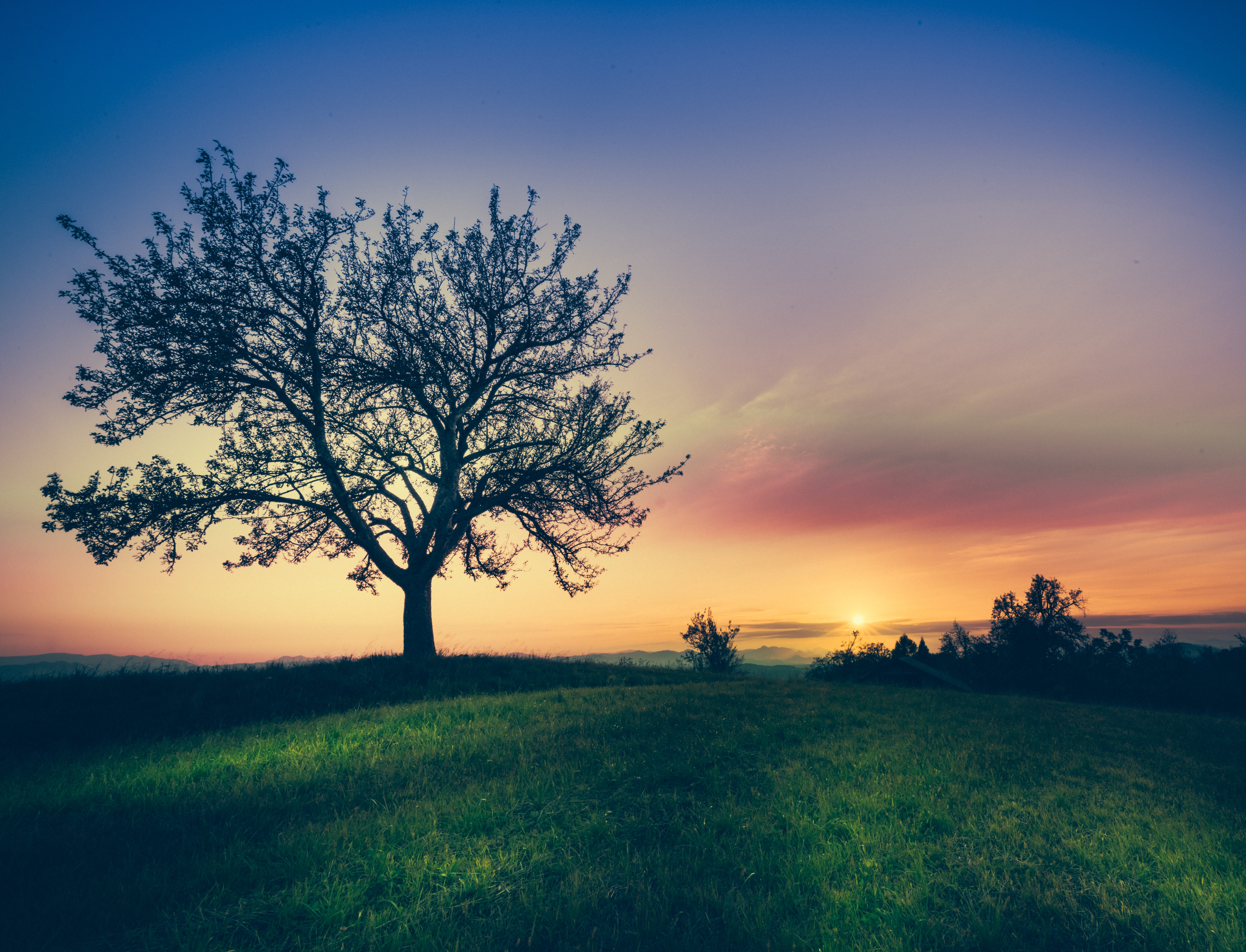 silhouette of tree surrounded by grass