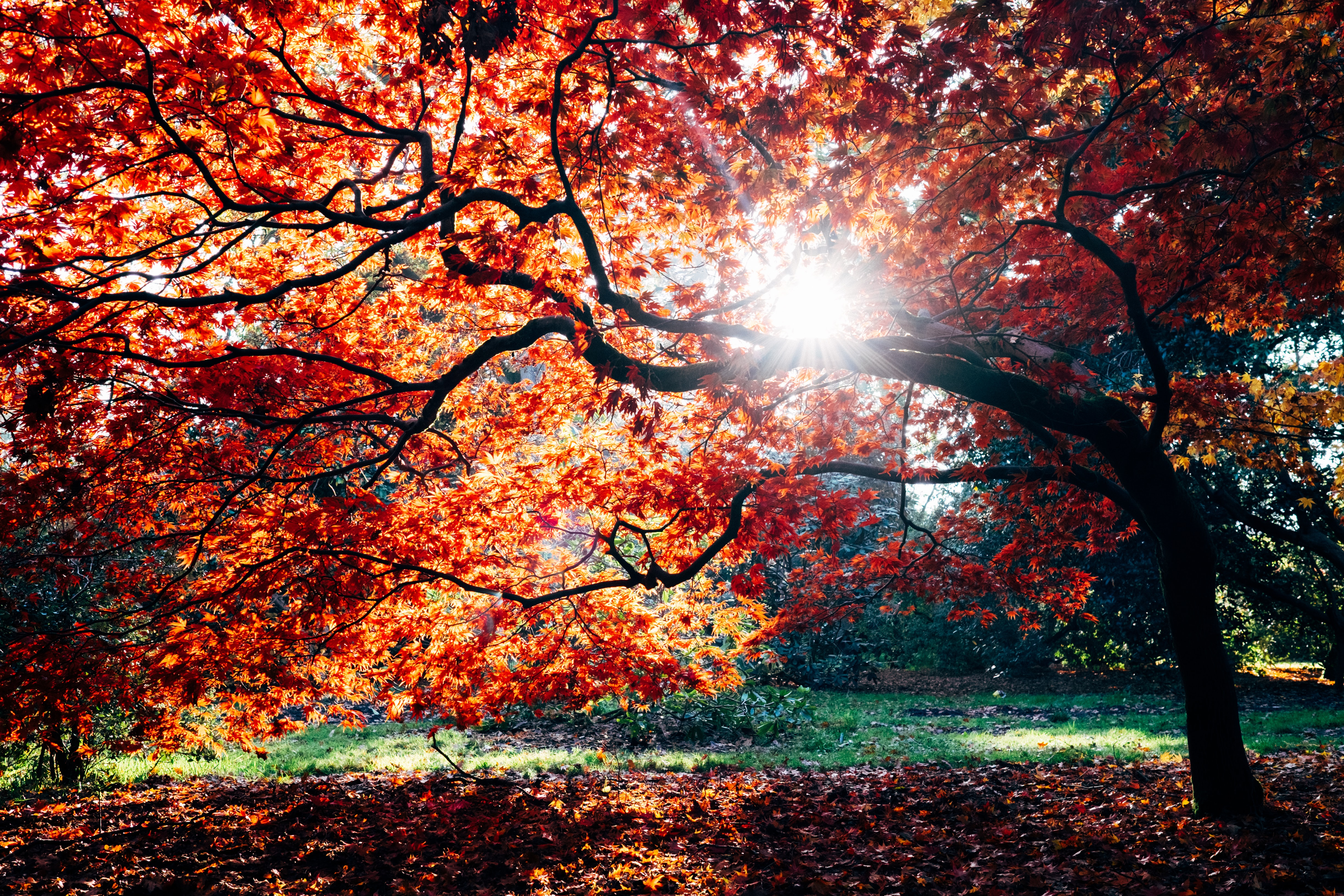 These are the things I love about Autumn autumn-poetry-2018 stories