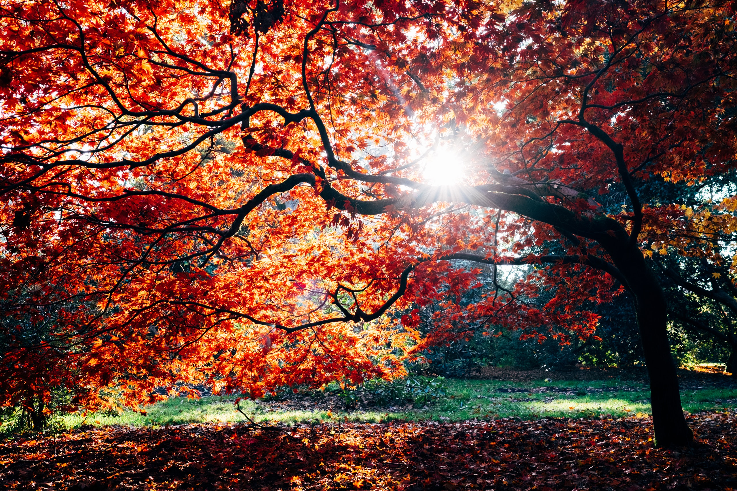 Read more about the article Americans Find They are Happier in Autumn Than Any Other Season