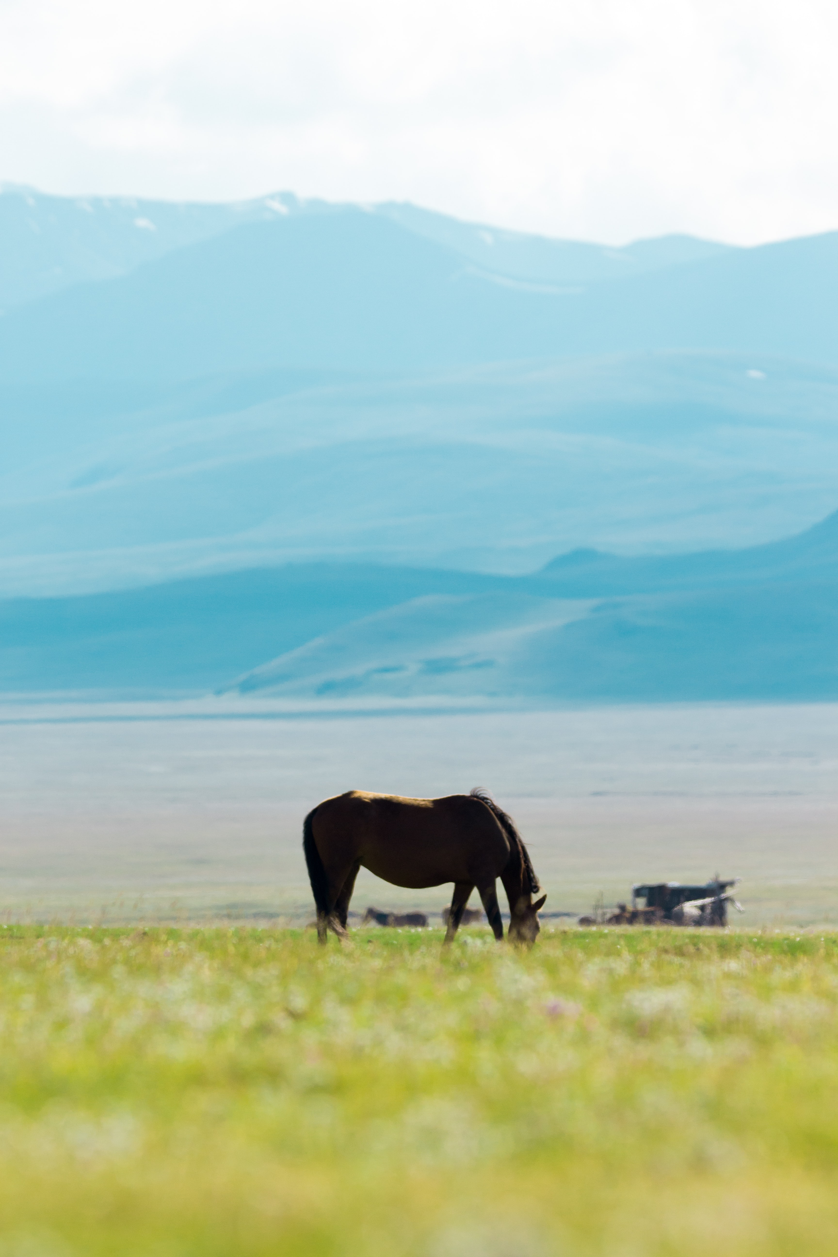 horse eating grass on field at daytime