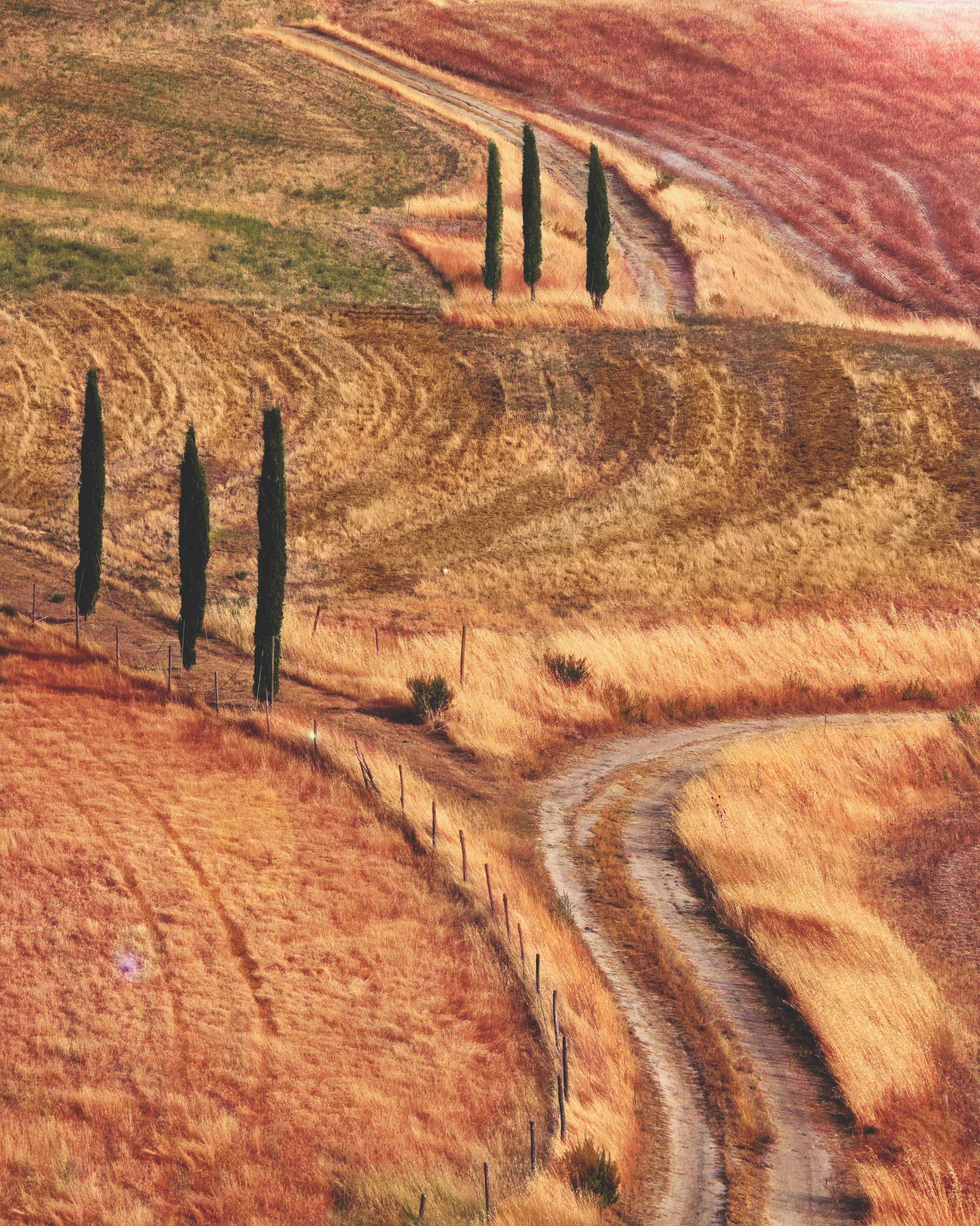 landmark photography of orange and red grasses field with pathway and green trees
