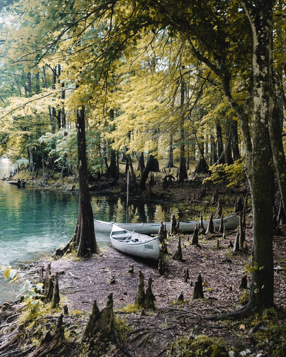 two gray canoes beside green trees