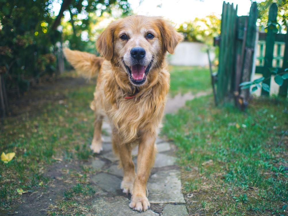 dog standing on pavement