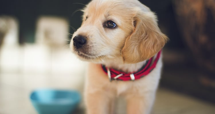 How much does it cost to set up a veterinary practice?