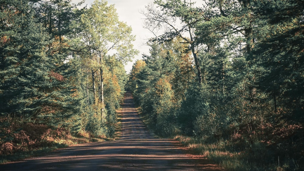 gray roadway between trees during daytime