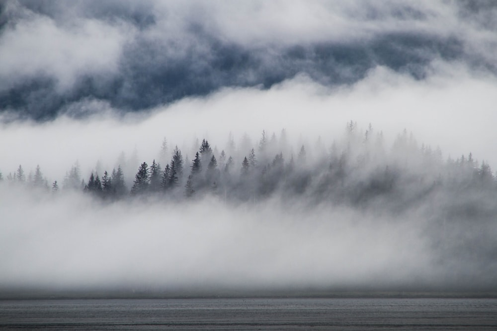 trees surrounded by fog