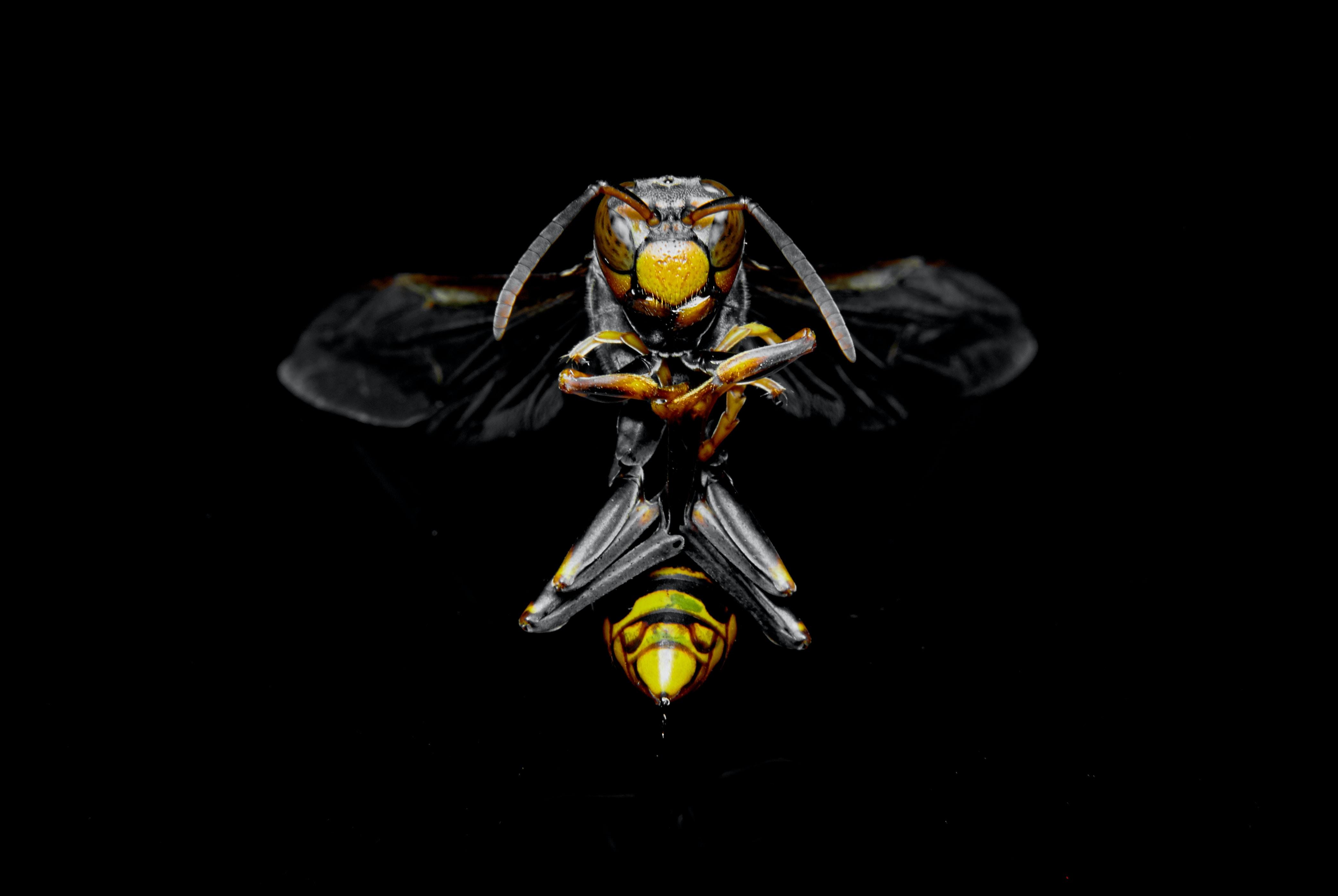 shallow focus photo of a hornet