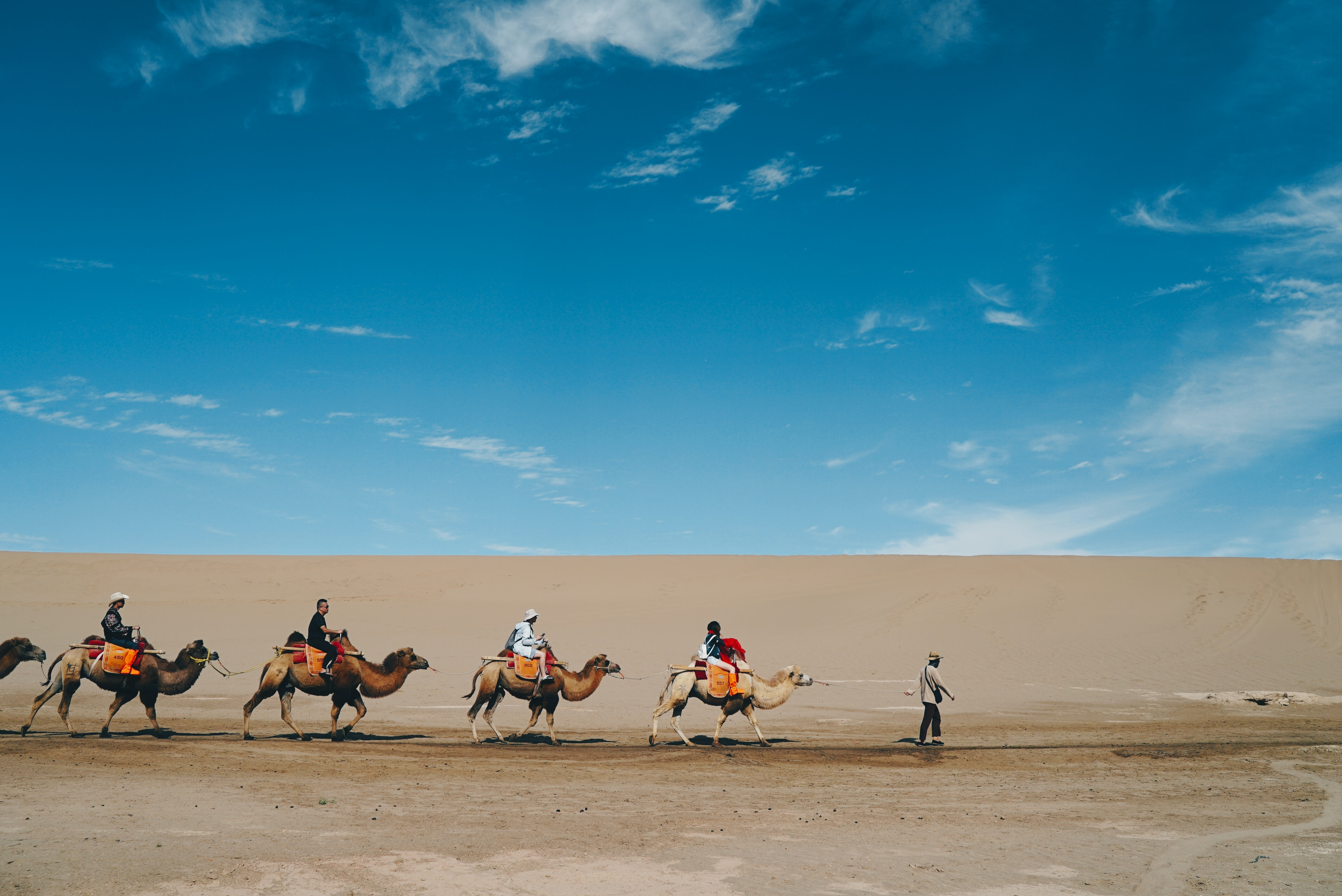 group of people riding on a camel