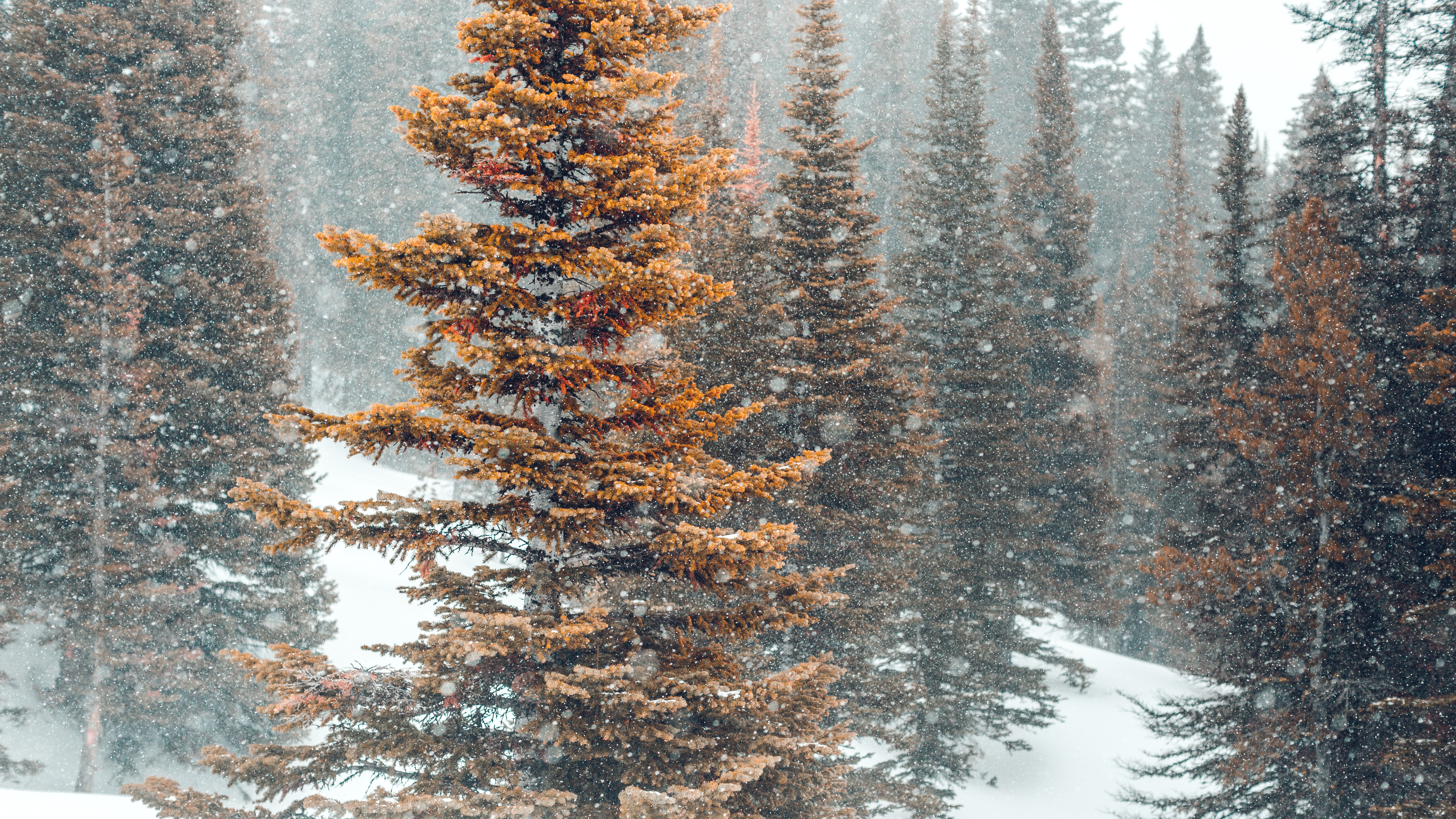 brown pine trees on snowy field during daytime
