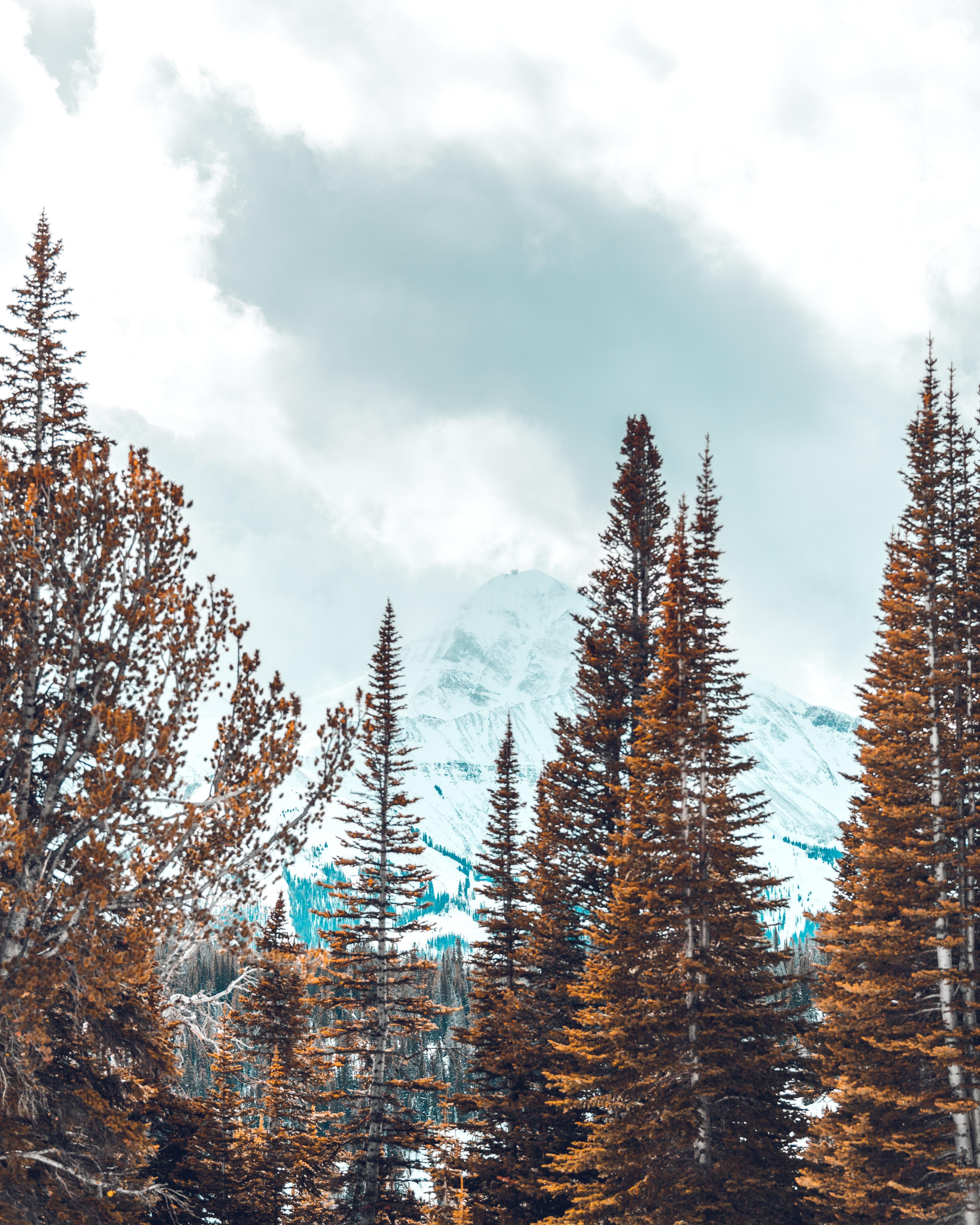photo of pine tree near mountain under blue sky