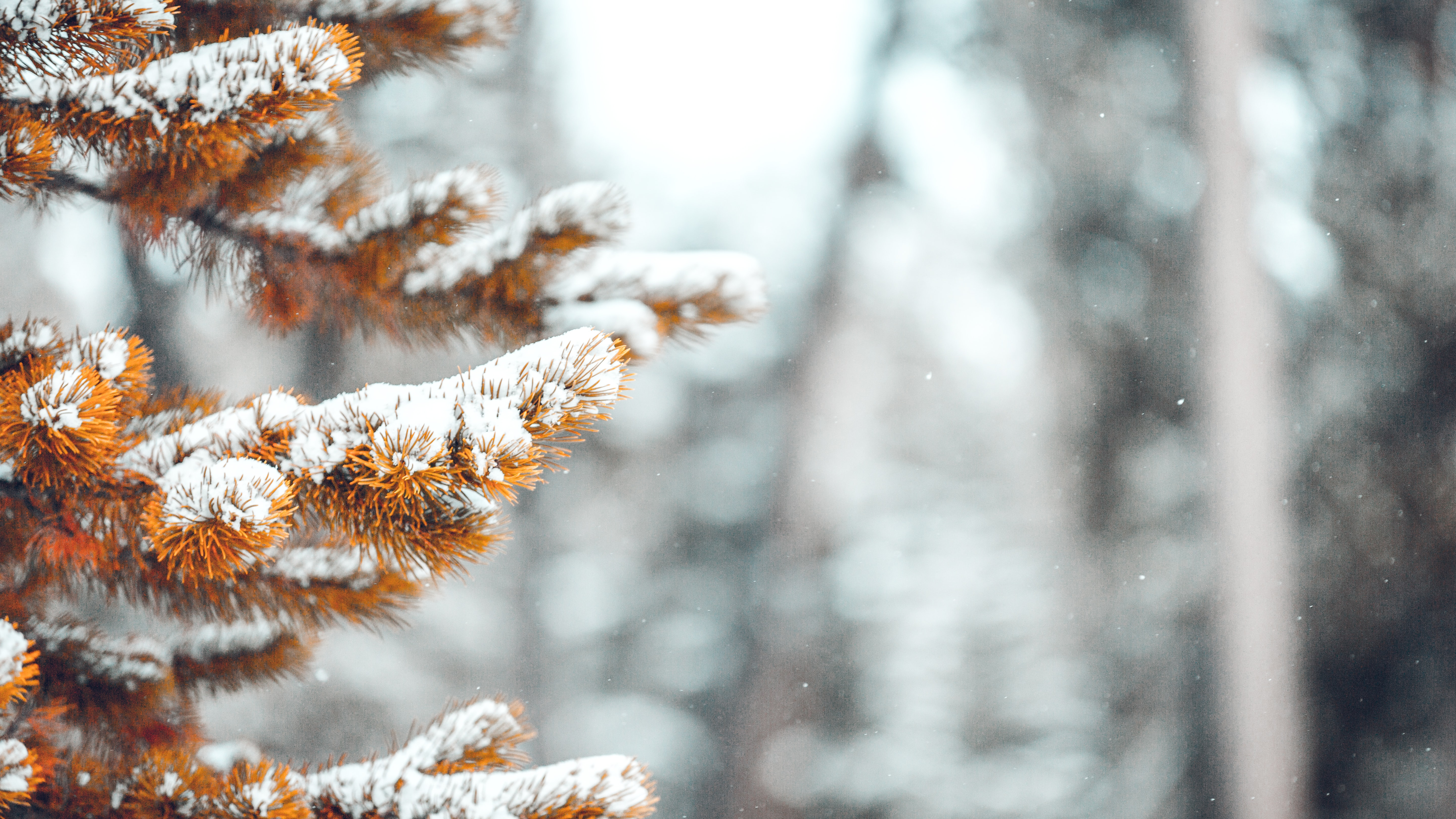 shallow focus photography of fall tree covered with snow