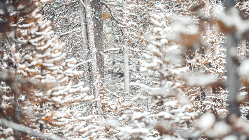 selective focus photography of snow-covered trees at daytime