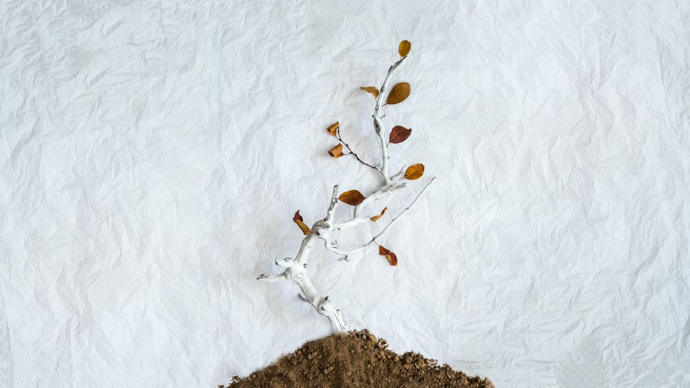 photo of brown leafed plant on soil
