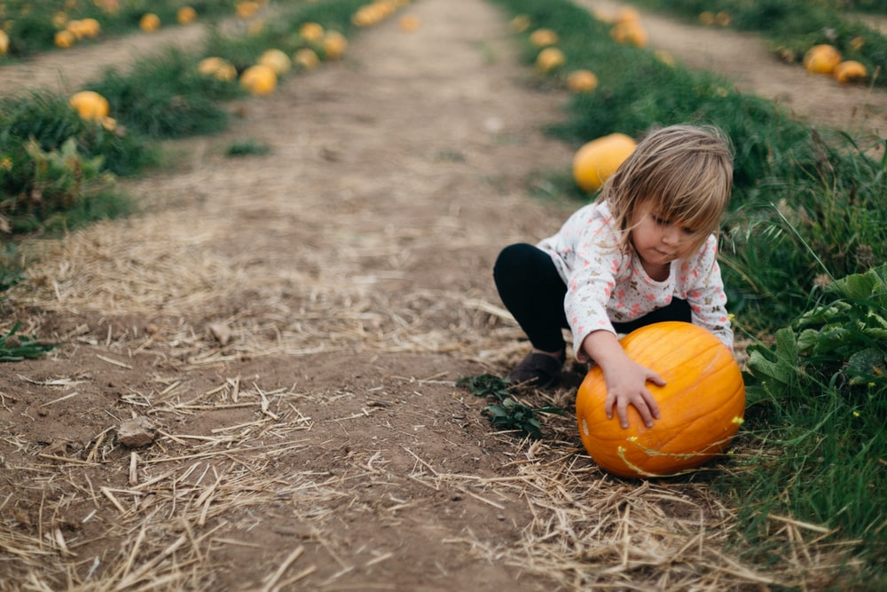 girl holding pumpkin beside green bushes during daytime