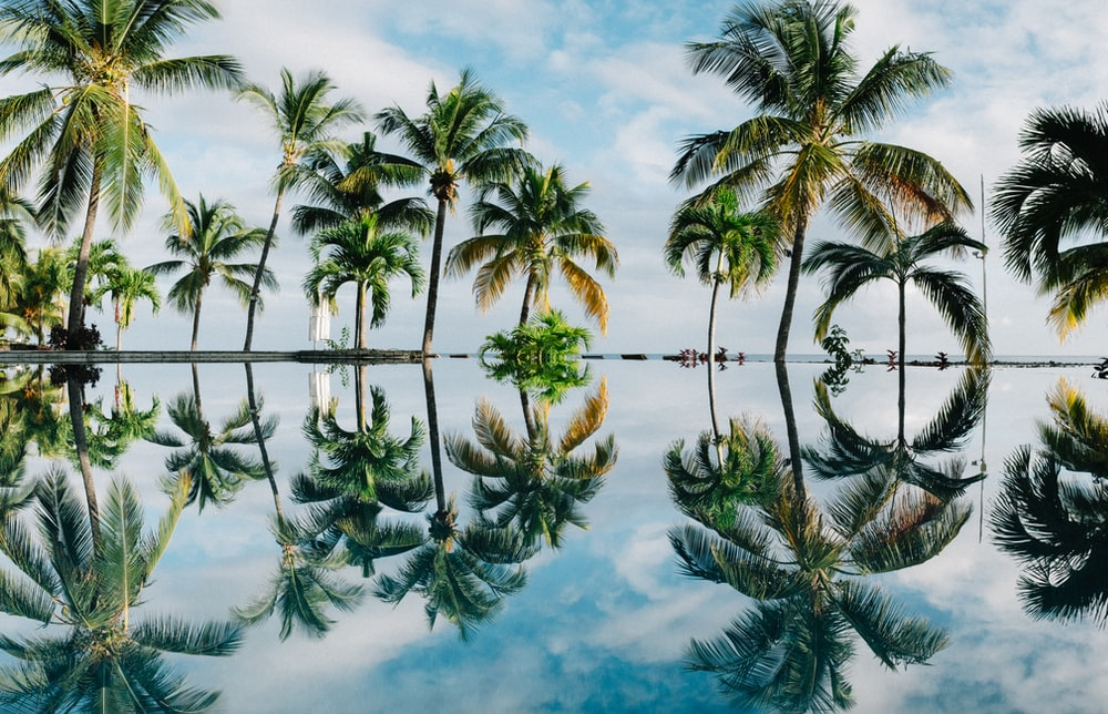 water reflection of coconut palm trees