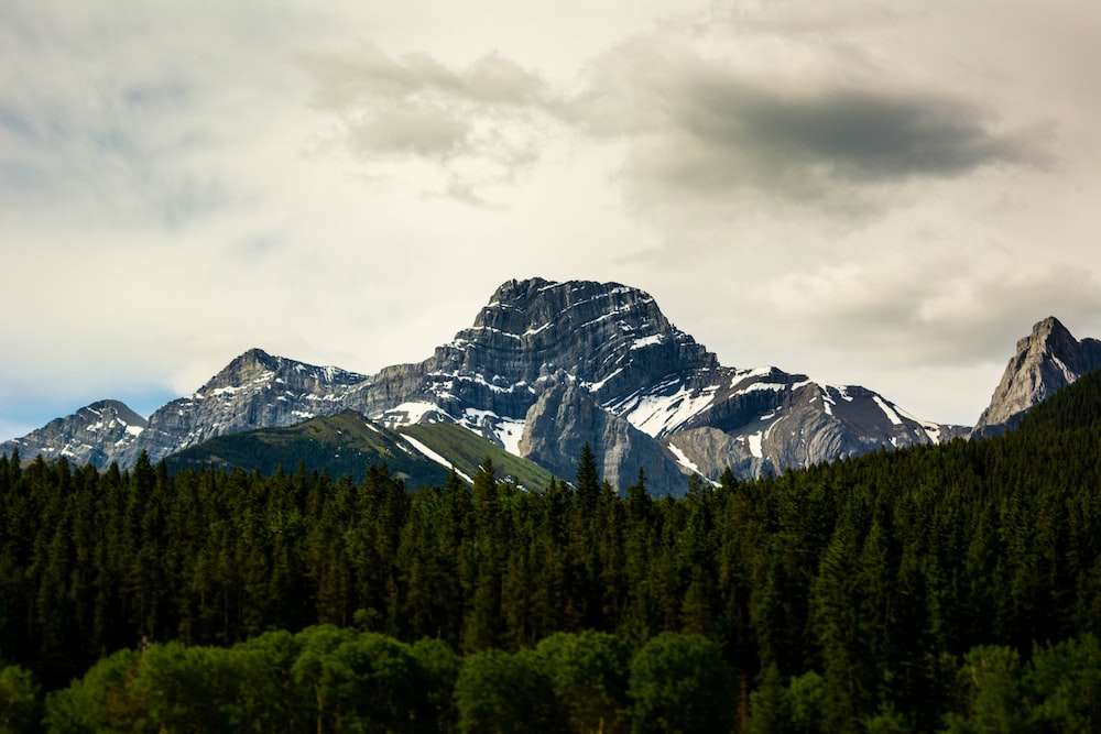 tall green trees and mountains under white sky during daytime