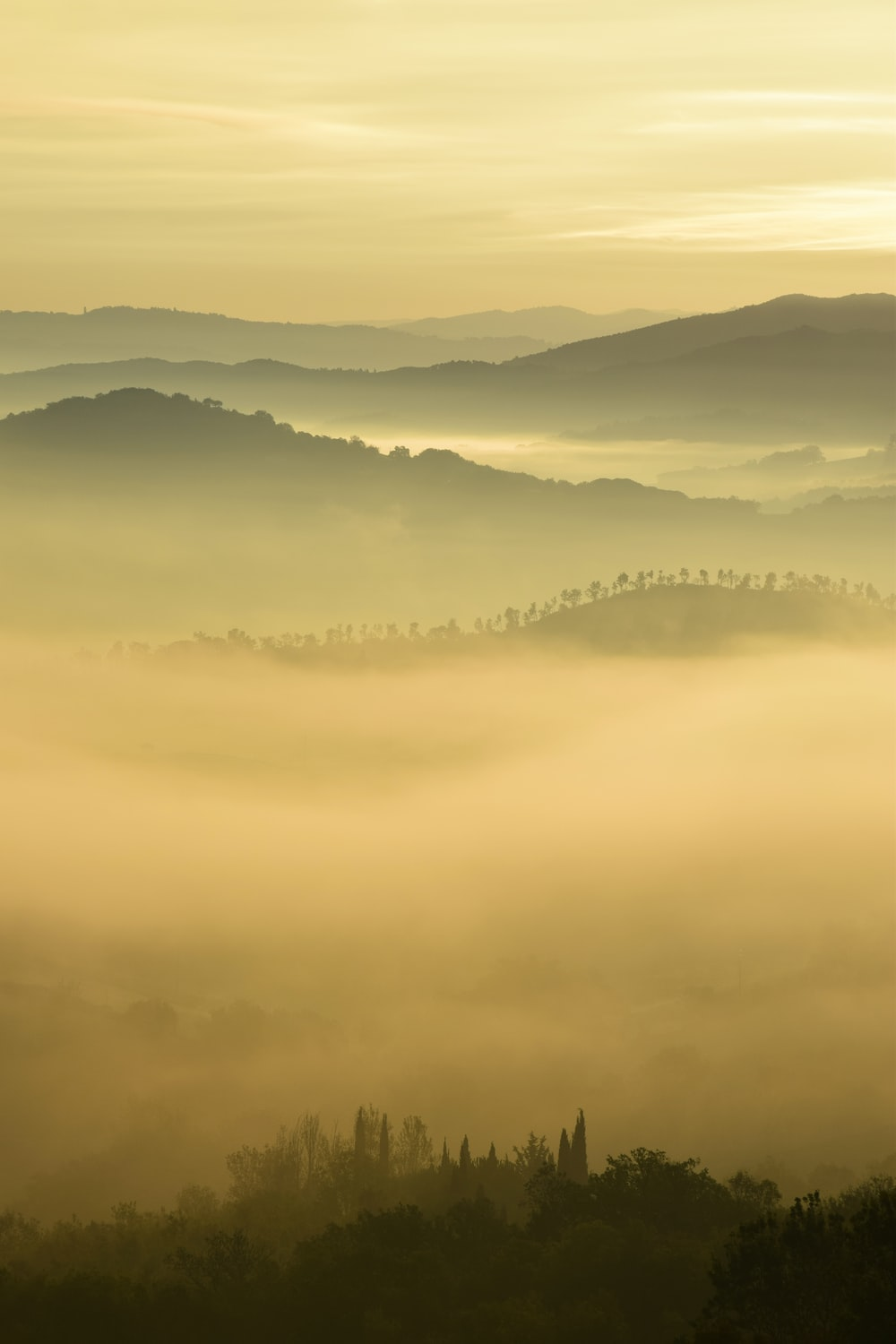 trees and hill surrounded by fogs under white clouds