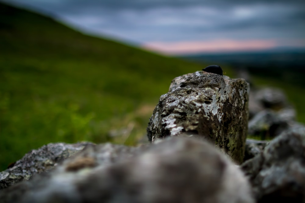 rock shallow focus photography