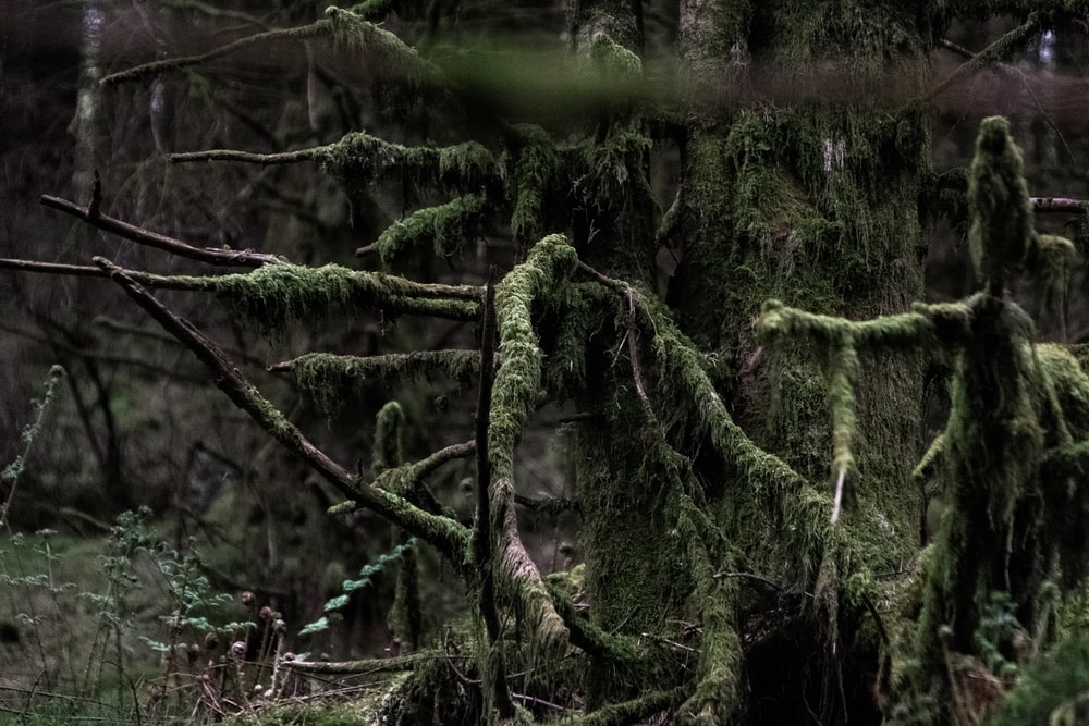 tree covered with moss during daytime