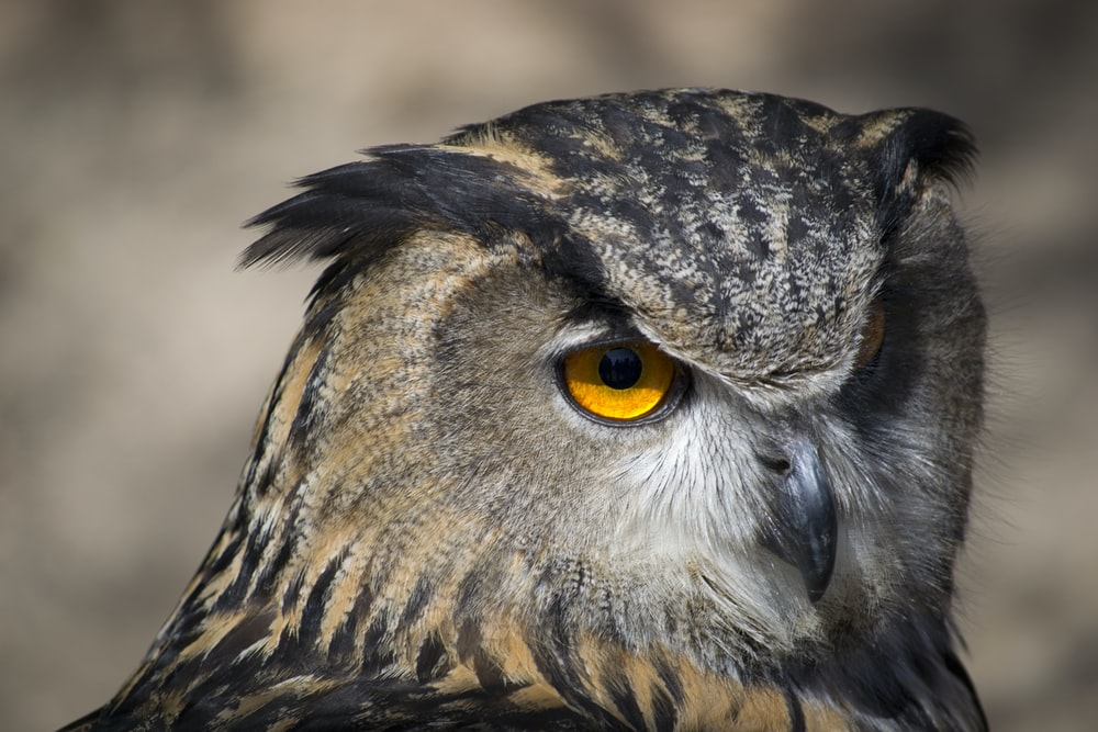 selective focus photography of brown and black owl
