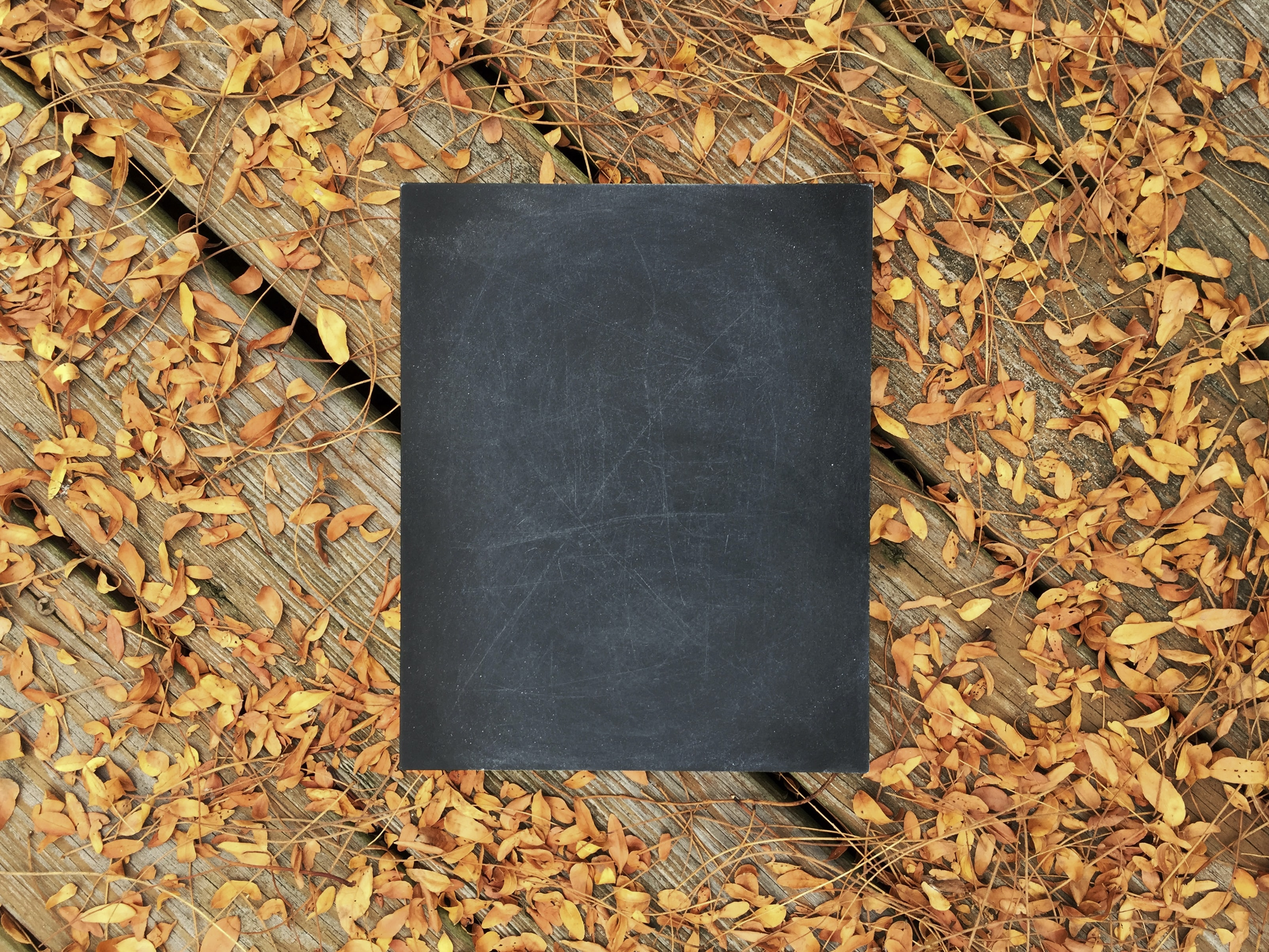 chalkboard on wooden surface with fallen leaves