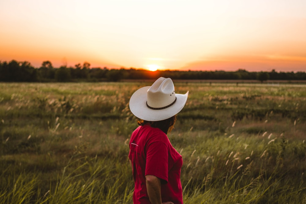 person standing near green grass under golden sky