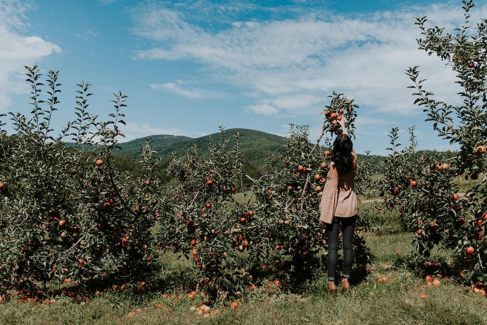 woman picking up orange fruit during daytikme