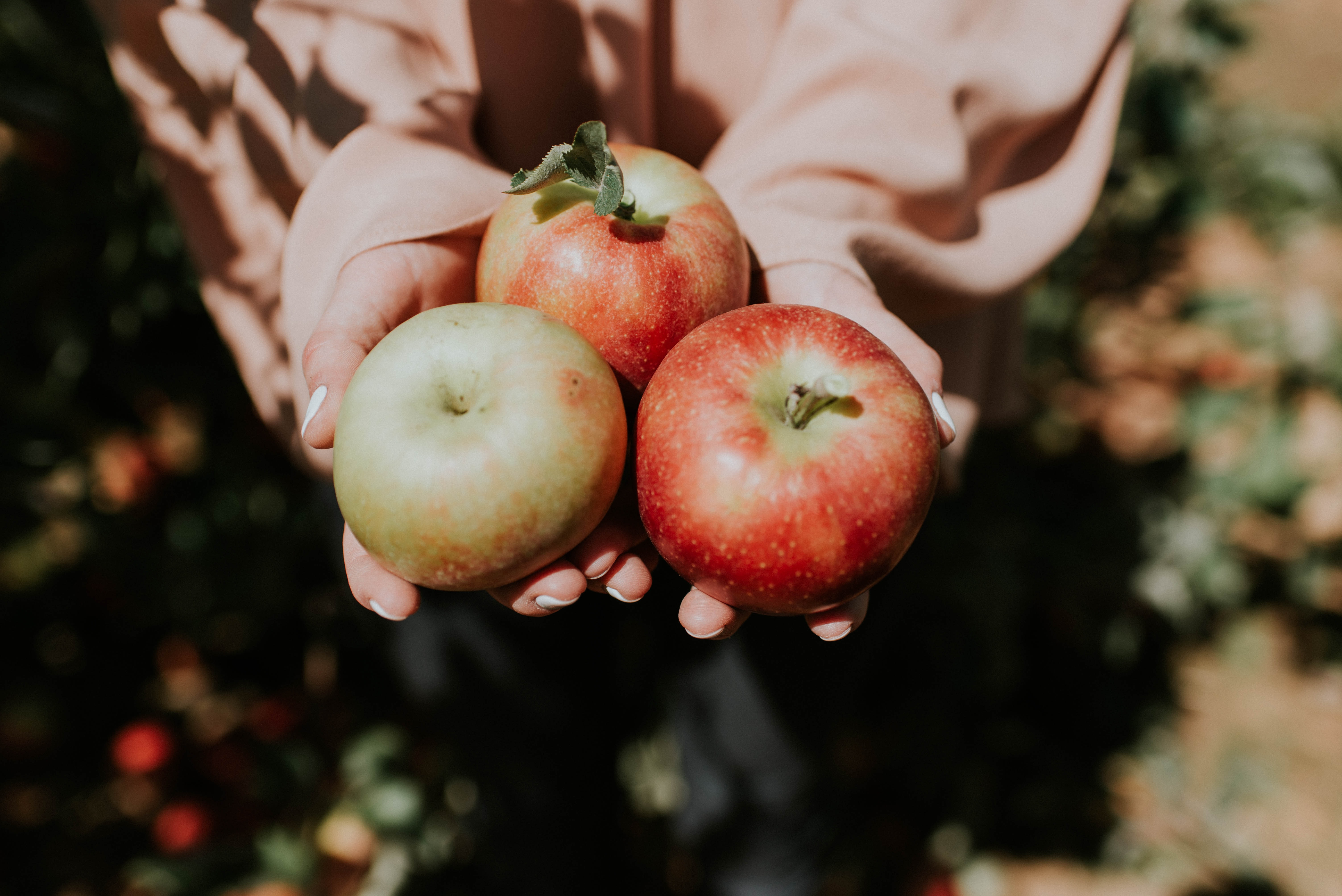 person holding three red apple fruits