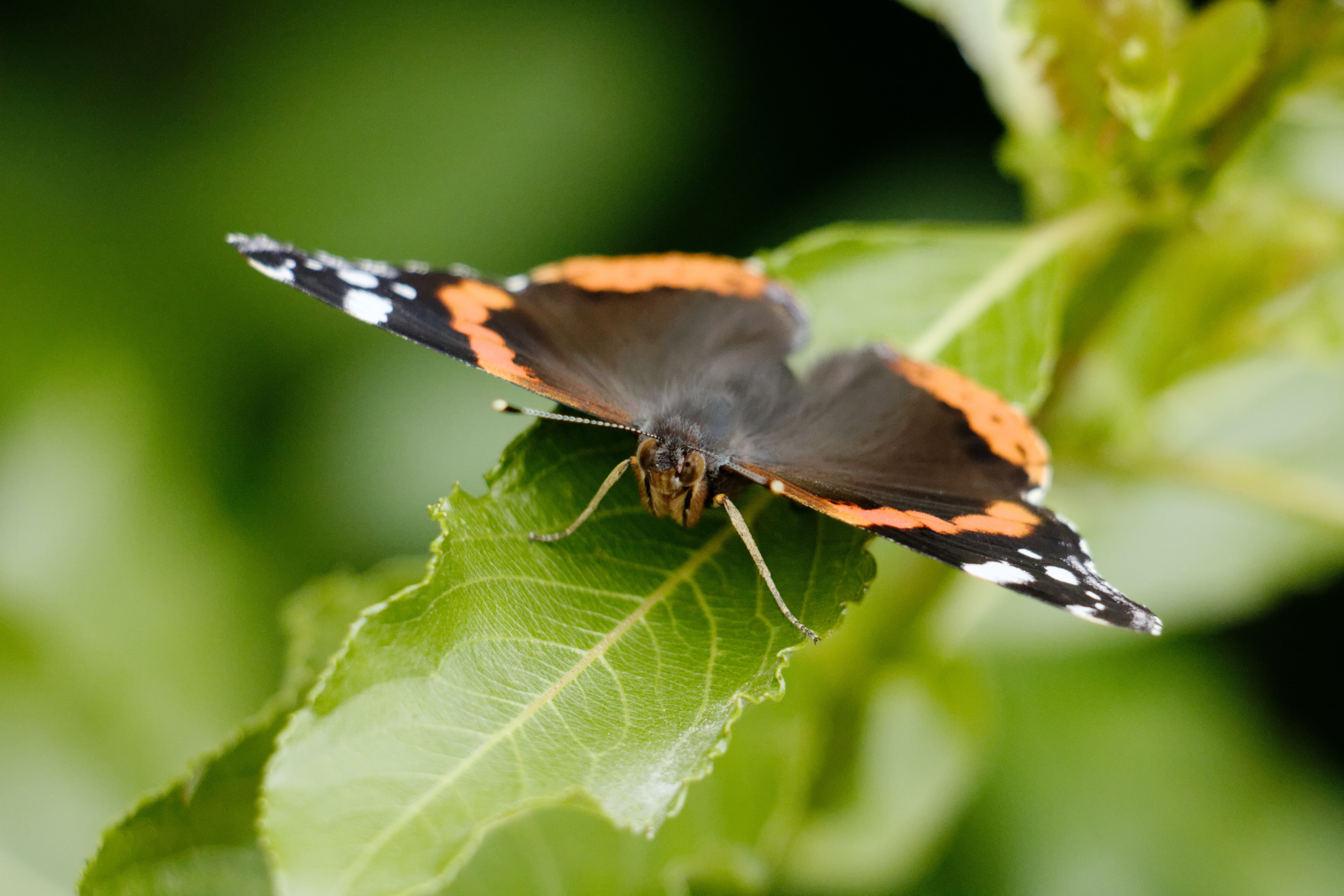 shallow lens photography brown and orange butterfly on top of green leaf