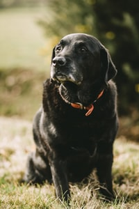 short-coated black dog in bokeh photography during daytime