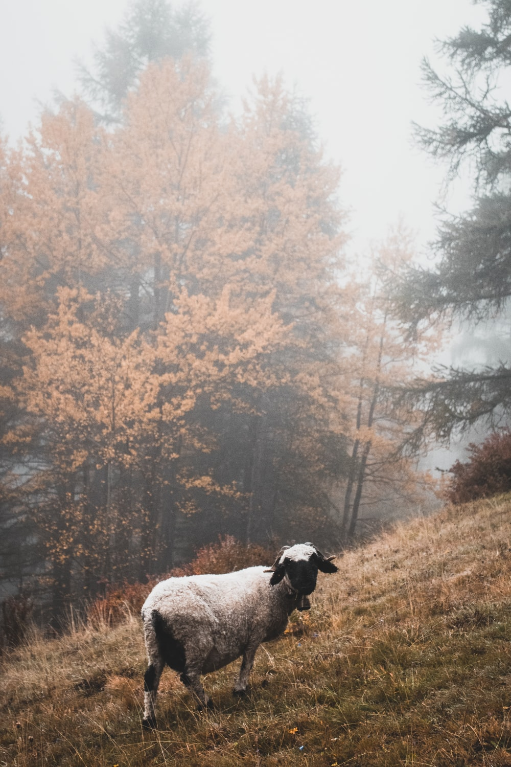 white sheep near on forest trees