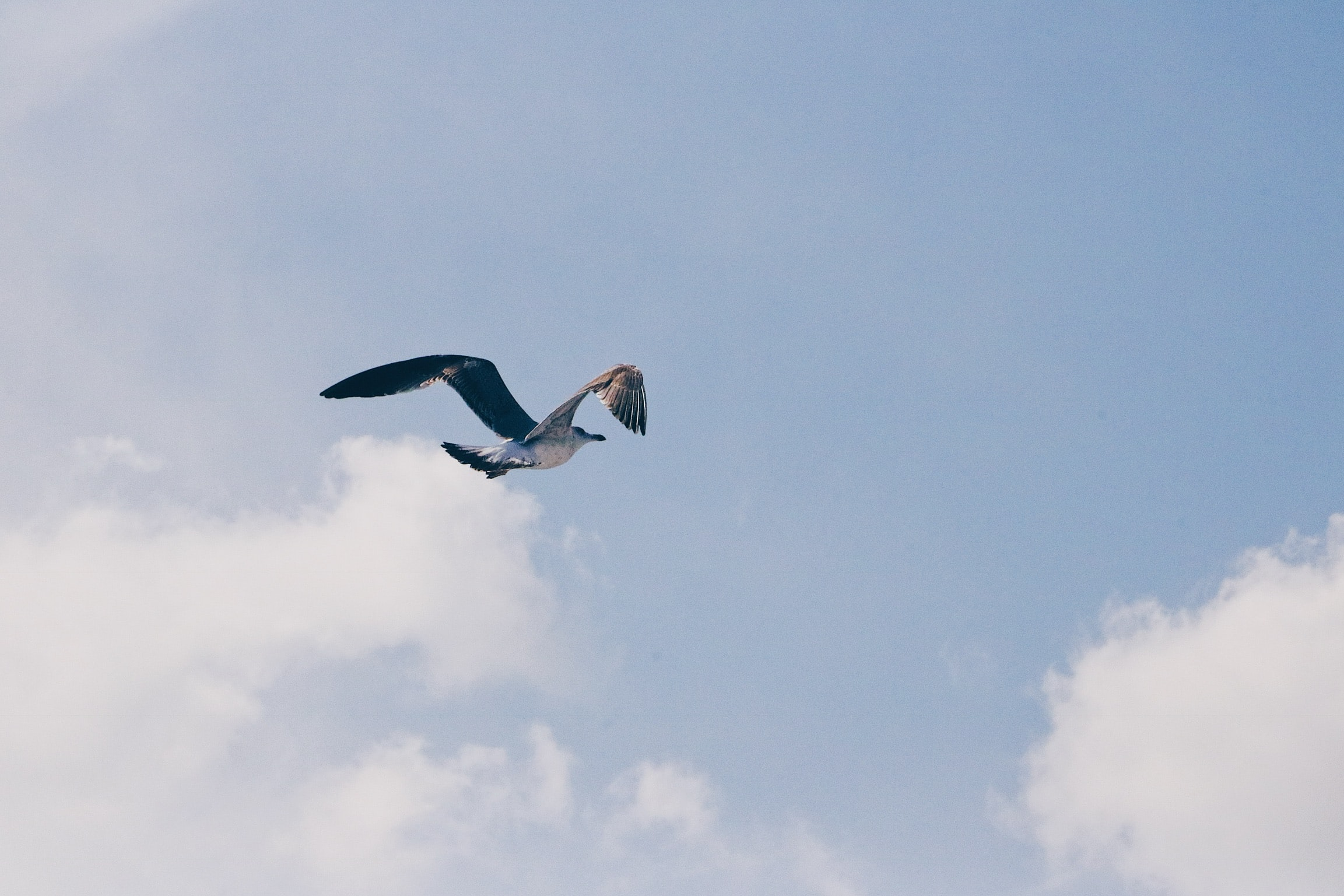 bird flying under white clouds