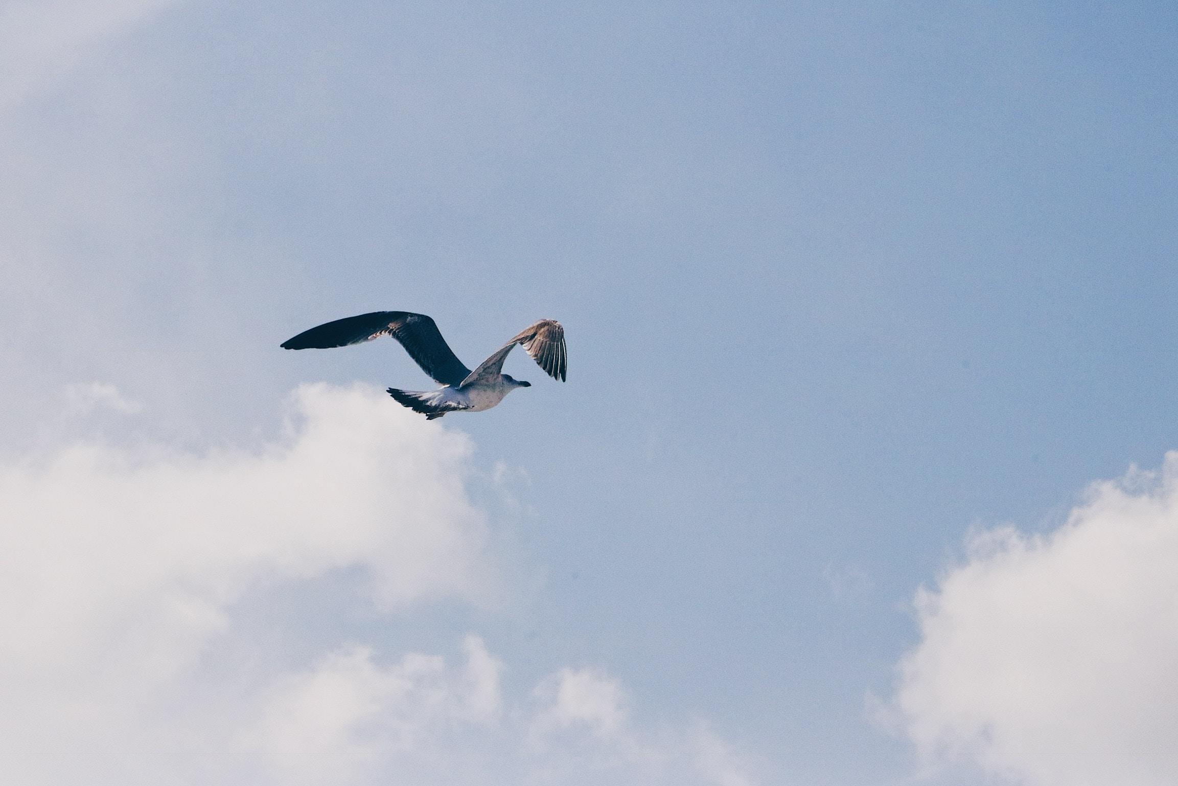 bird flying under white clouds