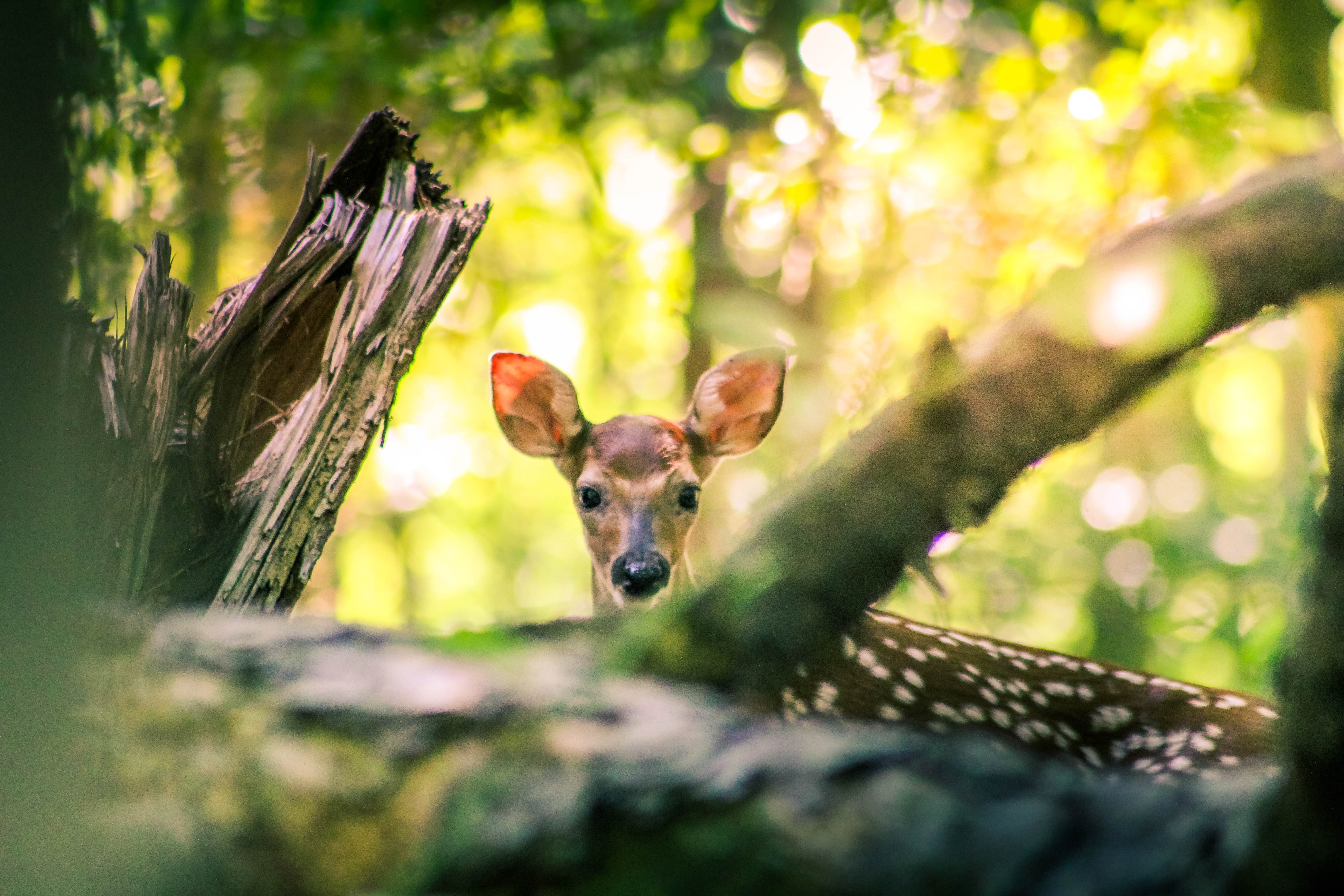 selective focus photography of brown deer under trees during daytime