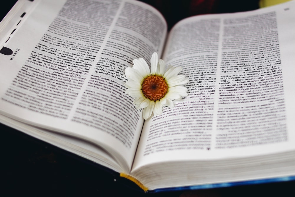 white petaled flower on book photo