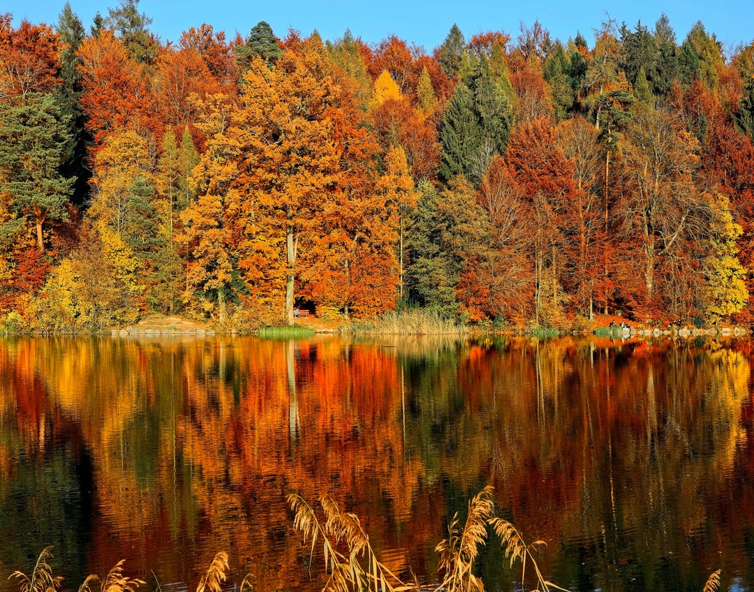 Autumn reflections 23