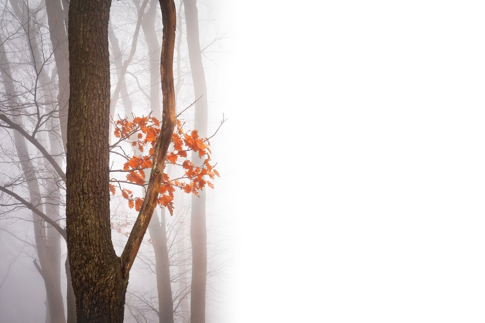 trees covered with thick fog
