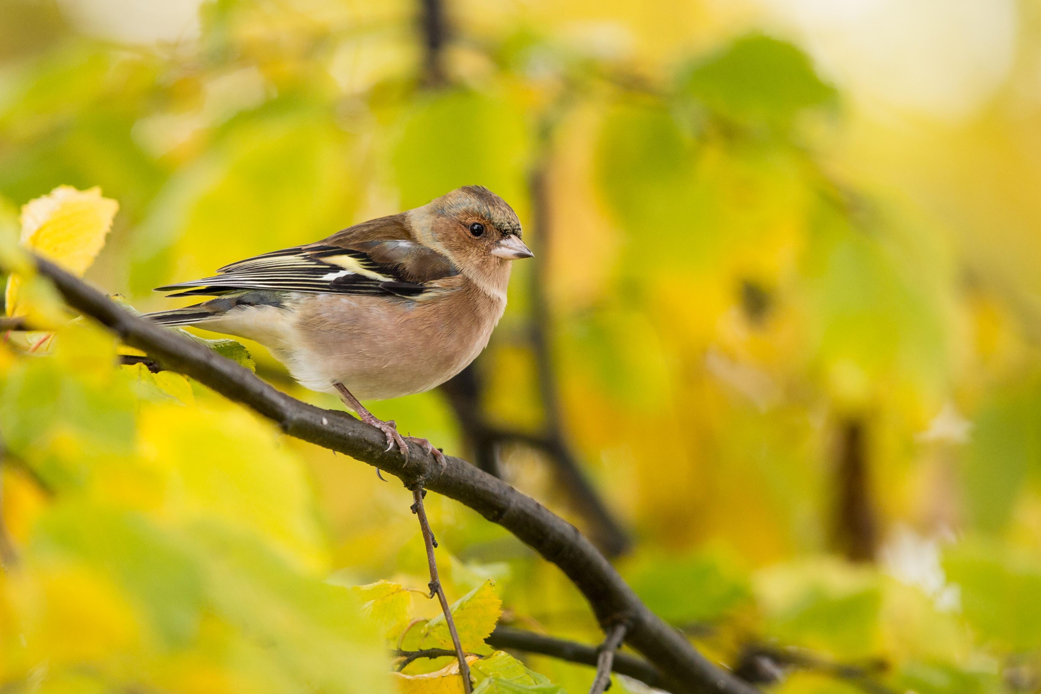 brown short-beaked bird on tree branch