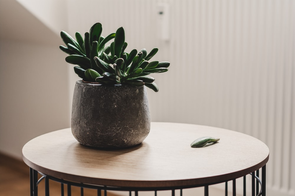 photo of succulent plant on table