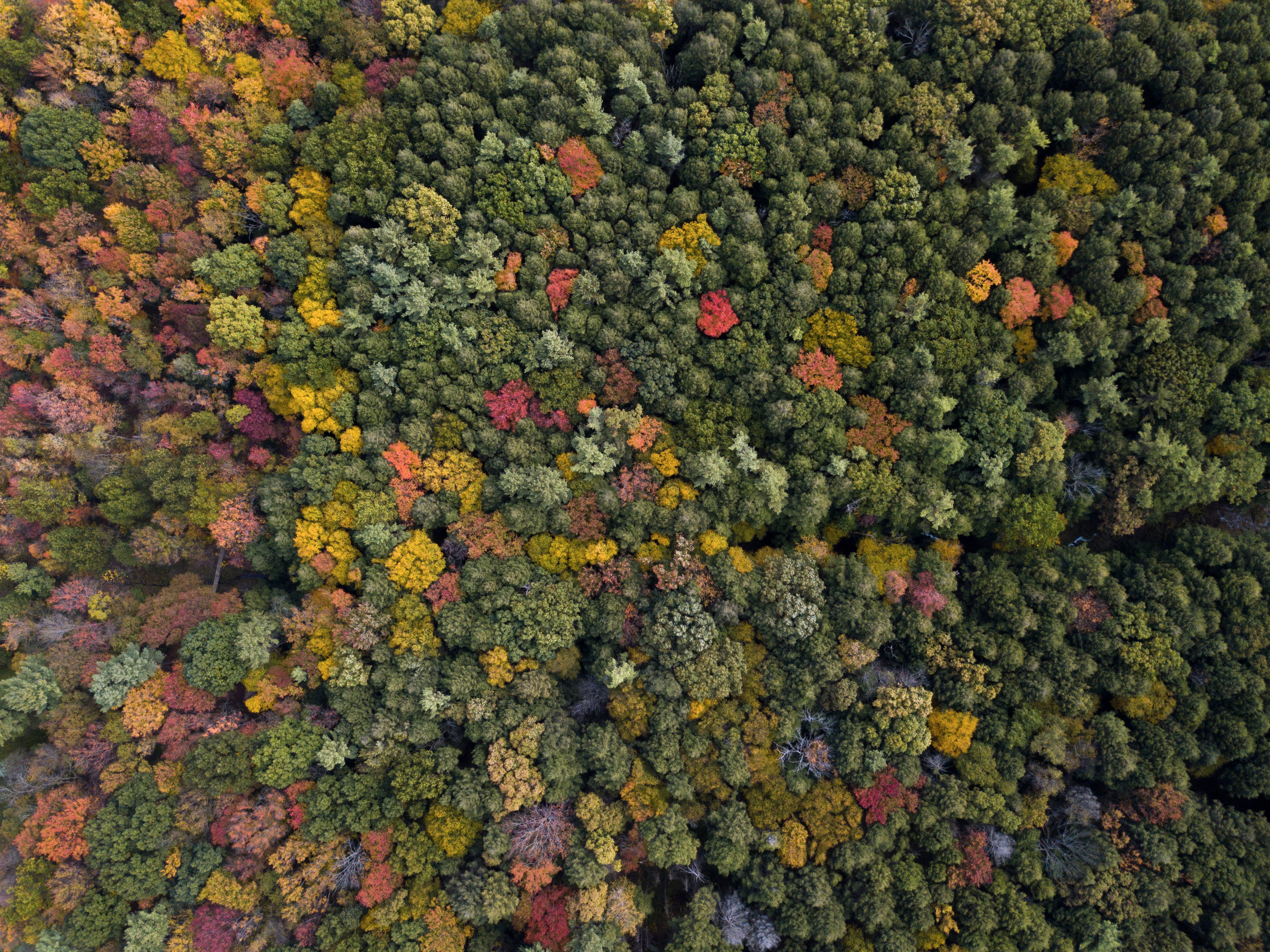 aerial photography of assorted-color trees at daytime